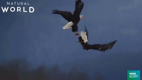 Eagles, Aquile Palermo