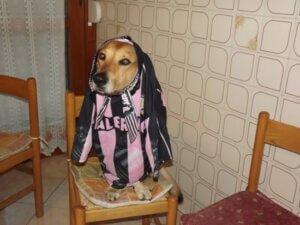 palermo dog EuroPAfs.club