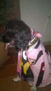 palermo dog fan EuroPAfs.club
